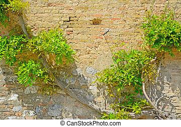 climbing plant on a brick wall
