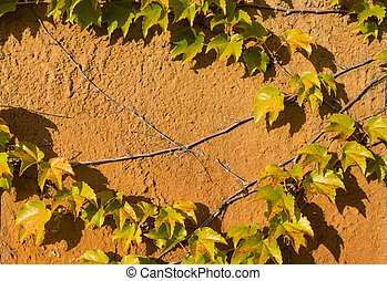 Climbing plant on the old rusty wall. Vintage style