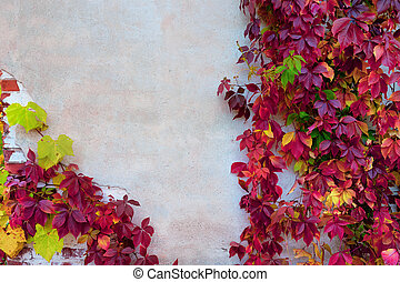 Climbing plant with bright leaves on the wall