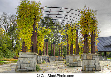 Climbing Plants in the Fall at the Park