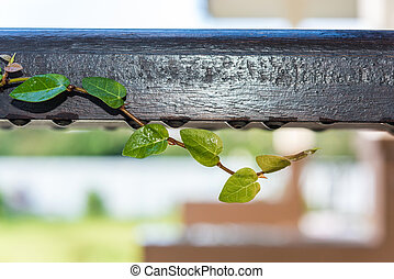 climbing plants on the wooden rail