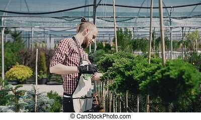 Climbing the camera, general plan. The guy is a grasshopper in mittens watering decorative coniferous trees.