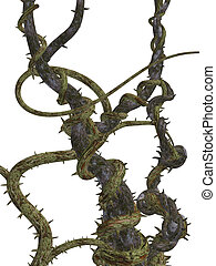 Climbing vines with thornes on a white background