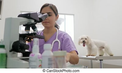 Clinic Staff With Woman Working As Veterinary In Pet Shop -...