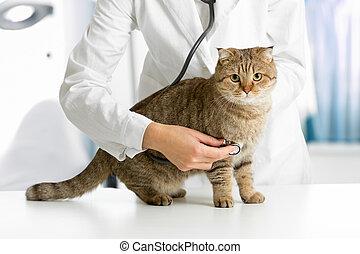 clinique, vétérinaire, chat