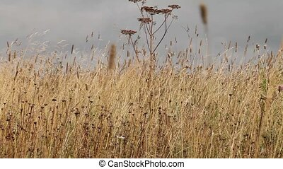 clip steppe - steppe in the late summer