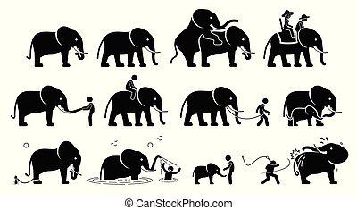cliparts., elefante, umano, pictograms, icone