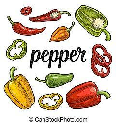cloche, entier, différent, couper, pepper., doux, gravure, jalapeno., habanero, vecteur, types, vendange, moitié, chilli
