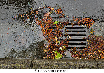 Clogged street drain