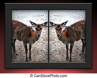 Cloned Deer - Whitetailed cloned female deers in black...