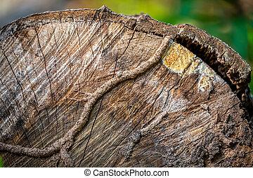 Close focus on cut tree surface