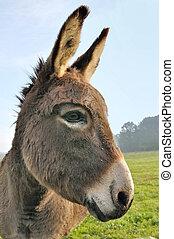 cut donkey  - close on a cut donkey in a meadow