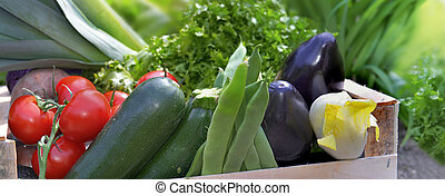 close on fresh and colorful vegetables in a crate in garden