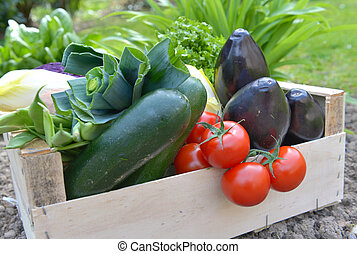 close on fresh and colorful vegetables in a crate put on the ground in a garden