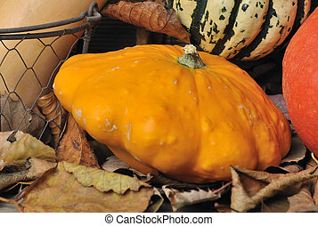 close on pattypan among dried leaves with other squashes