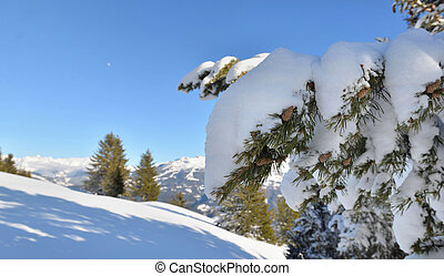 close on snow covered a branch of fir in front of snowcapped mountain under blue sky