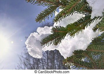 close on snow on the branch of fir