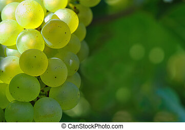 close on white grape