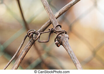 sear woodbine - close photo of sear woodbine growing on the...