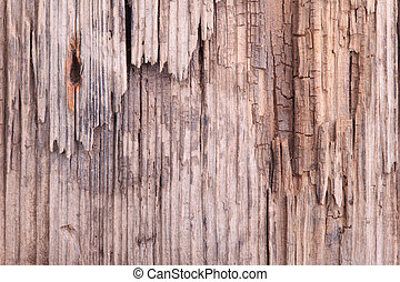 close rotten wood texture - old rotten wood texture close up...