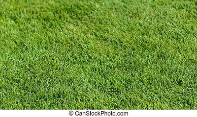 Close-u of putting golf ball on field