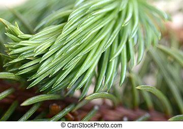 close-up, árvore, natal