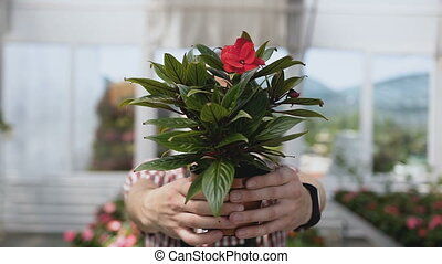 close-up a flower pot in the hands of the gardener, the...