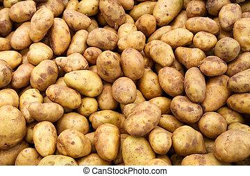 a lot of potatoes