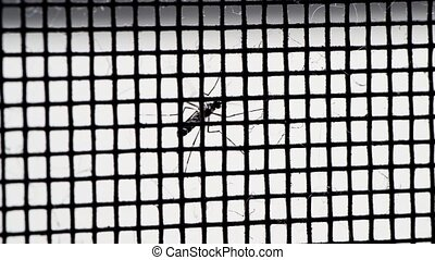 Mosquito on net - Close up a Mosquito on net