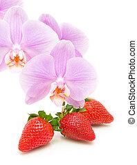 close-up, aardbei, achtergrond, witte bloemen, orchidee