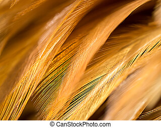 Close up abstract feather background