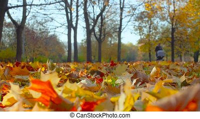 Autumn landscape - colorful maple leaves lie on the ground