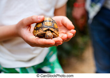 Close up baby tortoise