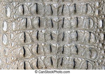 Close up back crocodile skin