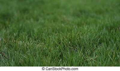 Close-up background of green grass.