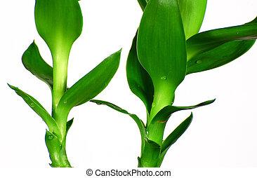 Close-up bamboo leaf