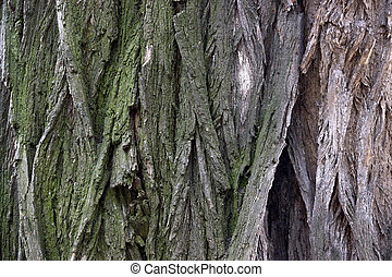 close-up bark of tree