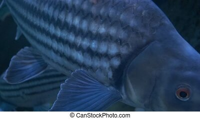 Close up beautiful fish in the aquarium. On decoration of...