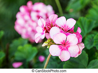 Close up beautiful pink flowers