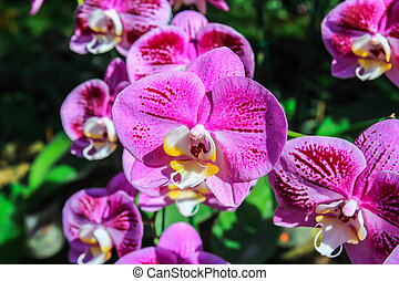 Close up beautiful pink orchid