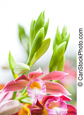 Close up beautiful pink orchid on blurred nature background. Selective focus.