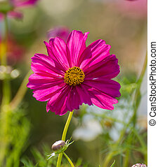Close up beautiful purple flower