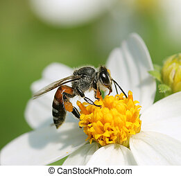 Close up bees on flower