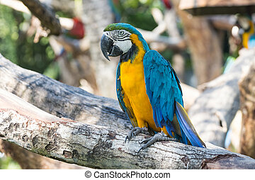Close up Bird Blue-and-yellow macaw standing on branch of tree