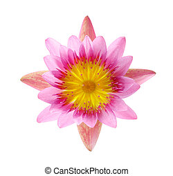 Close up blooming water lily or lotus flower isolated on white