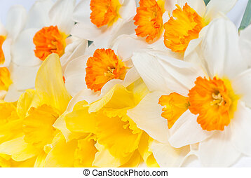 Close up bouquet of narcissus