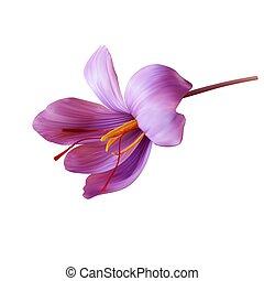 close-up., brote, flor, costoso, abierto, condimento,...