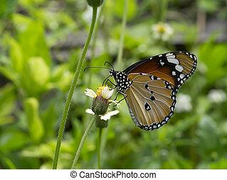 butterfly on flower grass