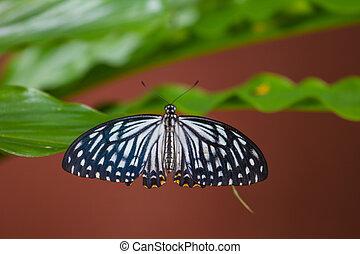 Butterfly on flowers in garden