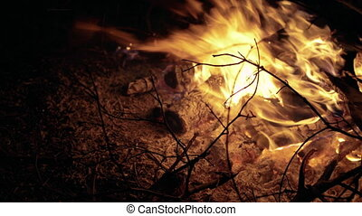 Close up campfire burning wood. Background in 4K
